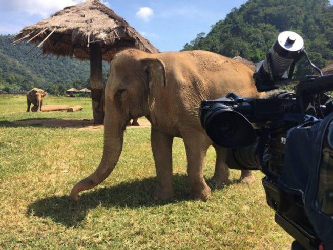 Tournage Elephant